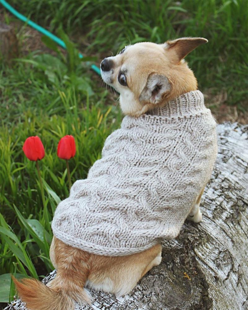 свитер с аранами для чихуахуа
