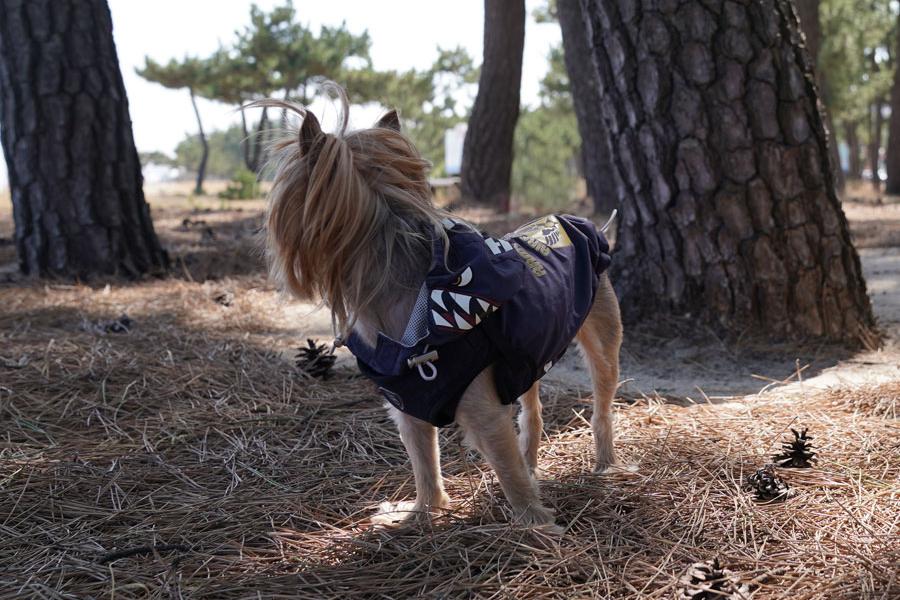 Дождевик для собаки Puppy Angel