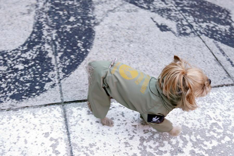 Дождевик для собаки со светоотражателями