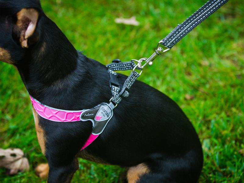 шлейка для собак обнимашки