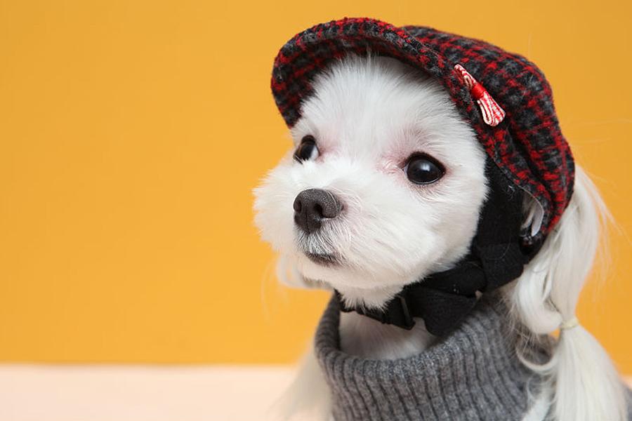 Кепка для собаки