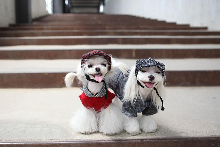 Собачки в шапках Puppy Angel