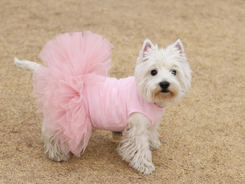платье с пышной юбкой для собаки