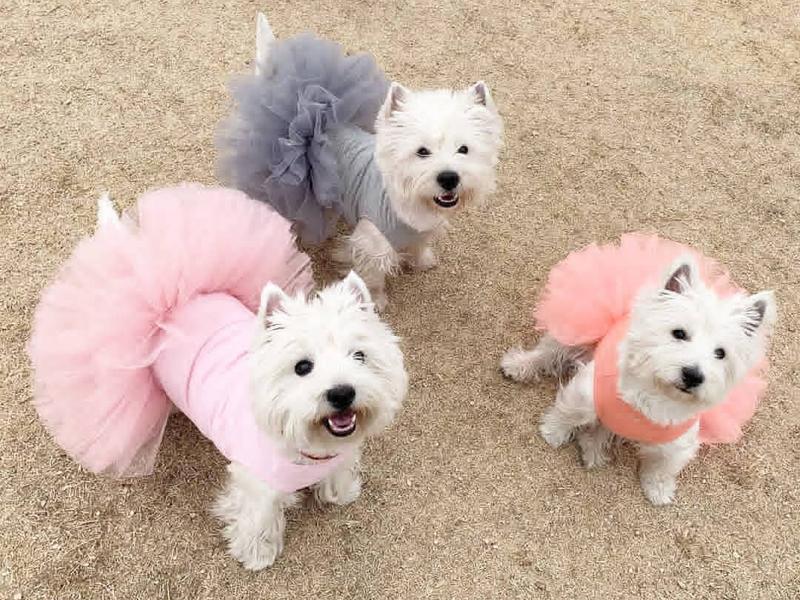 платье пачка для собаки