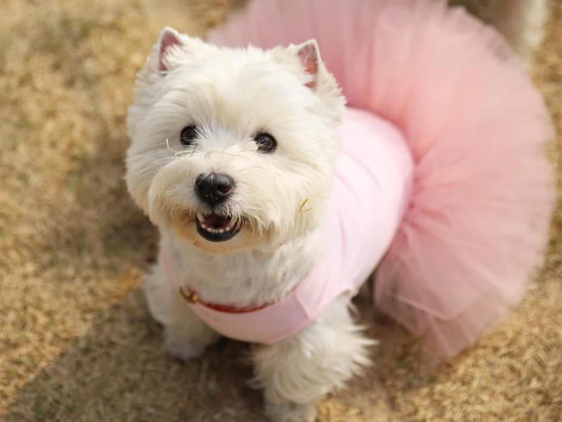 летнее платье для собак