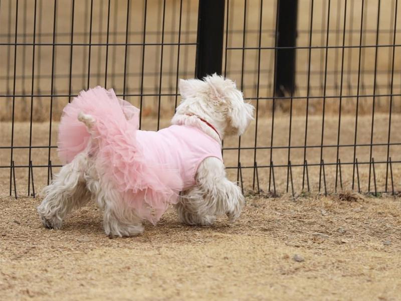 балетное платье для собак