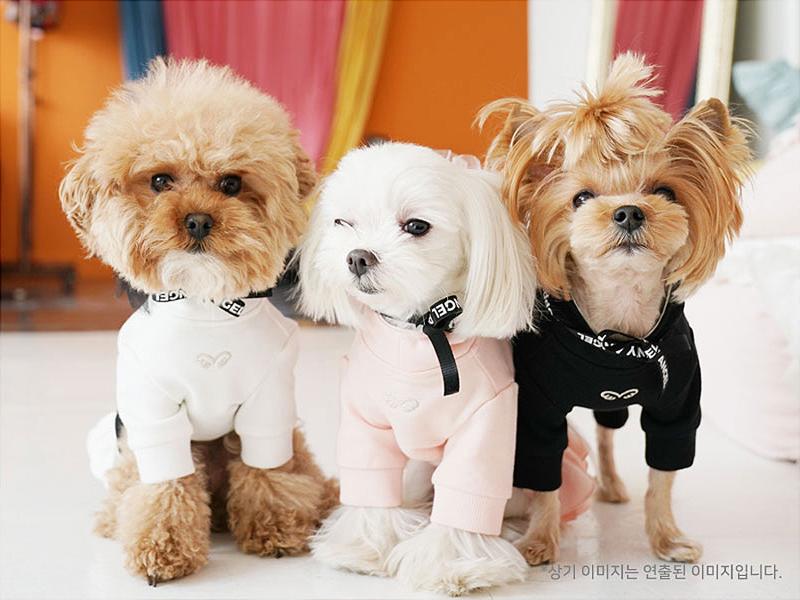 спортивное платье для собаки