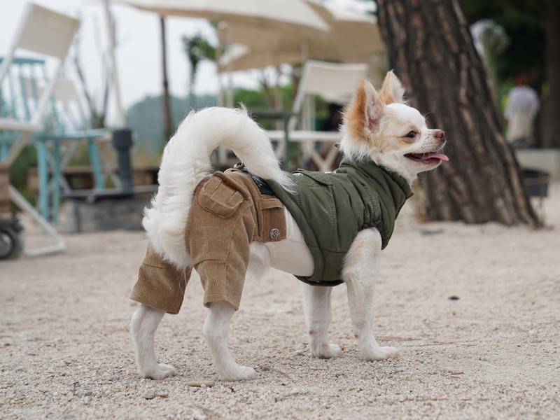 брючки для собаки
