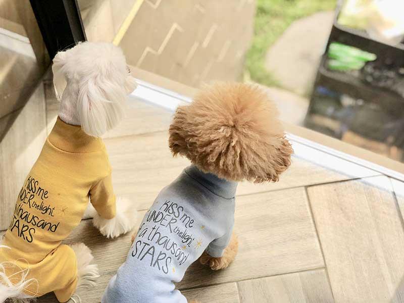 трикотажный костюм для собаки