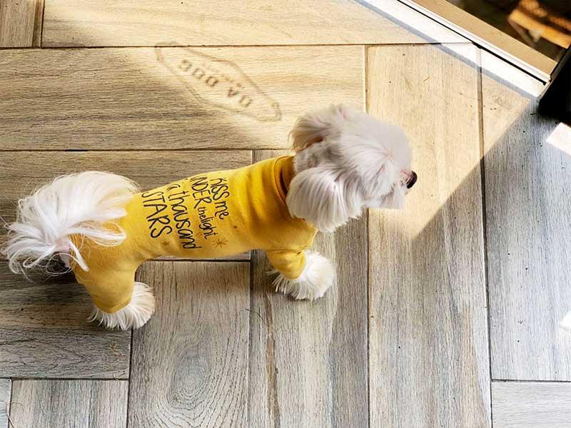 пыльник для собаки
