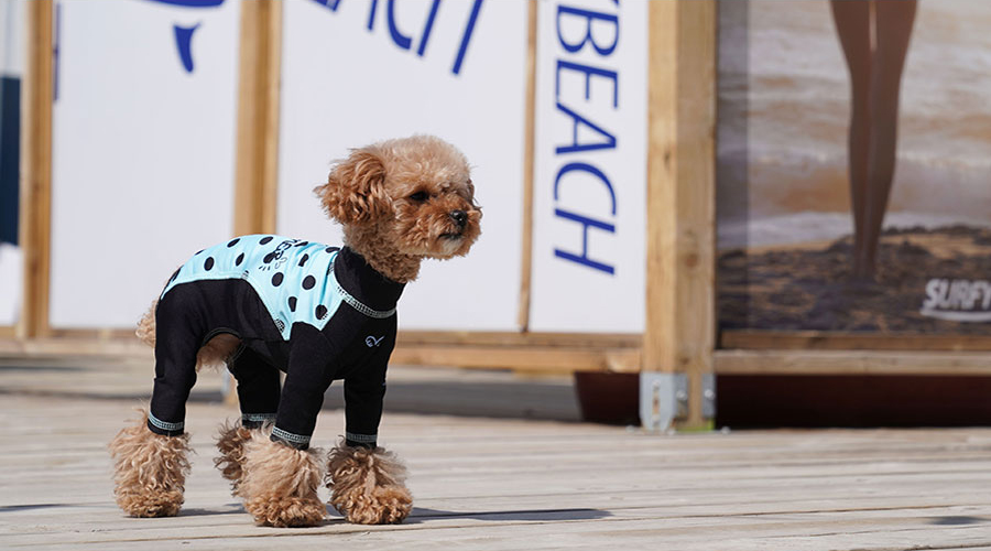 Спорт костюм для собак