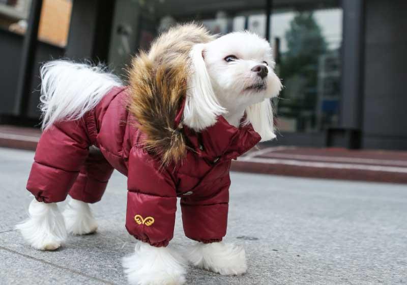 теплый комбинезон для собаки