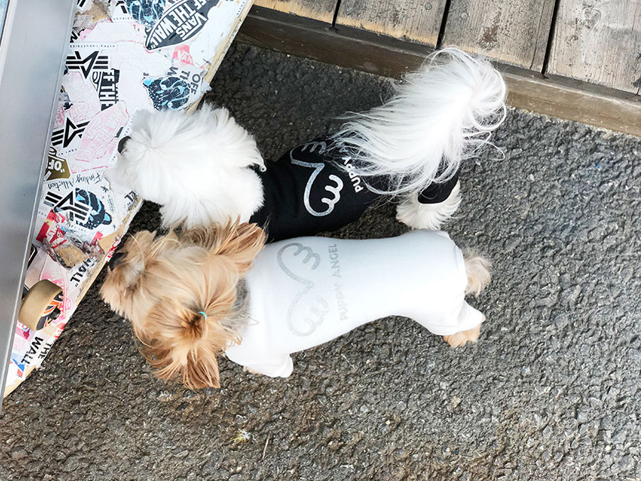 Трикотажный комбинезон для собак