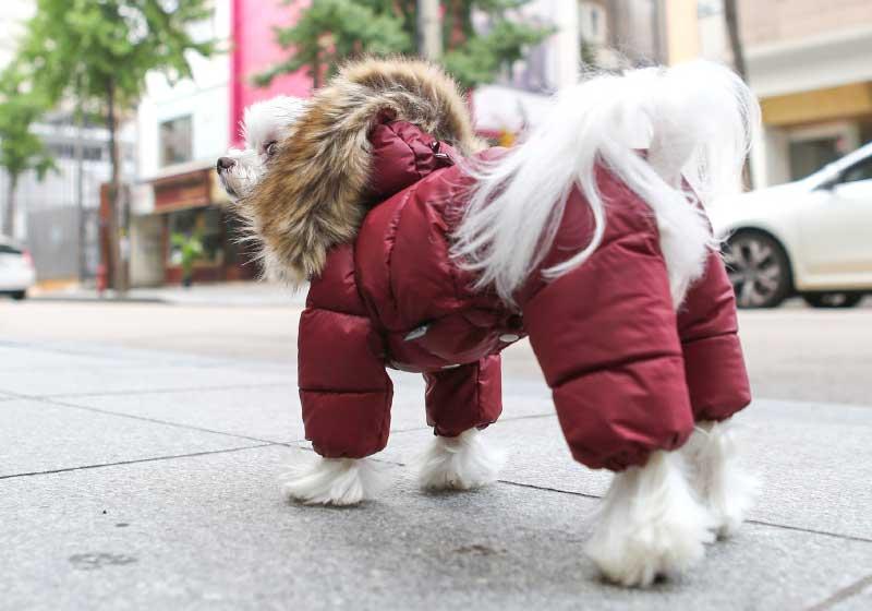 супер теплый комбинезон для собаки