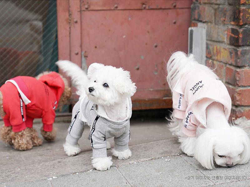 собачки в костюмах