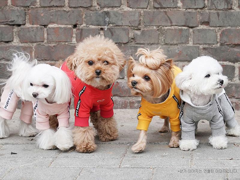 спорт костюм для собаки