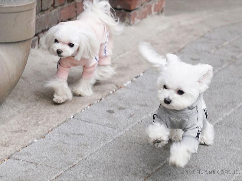 костюм из футера для маленькой собачки