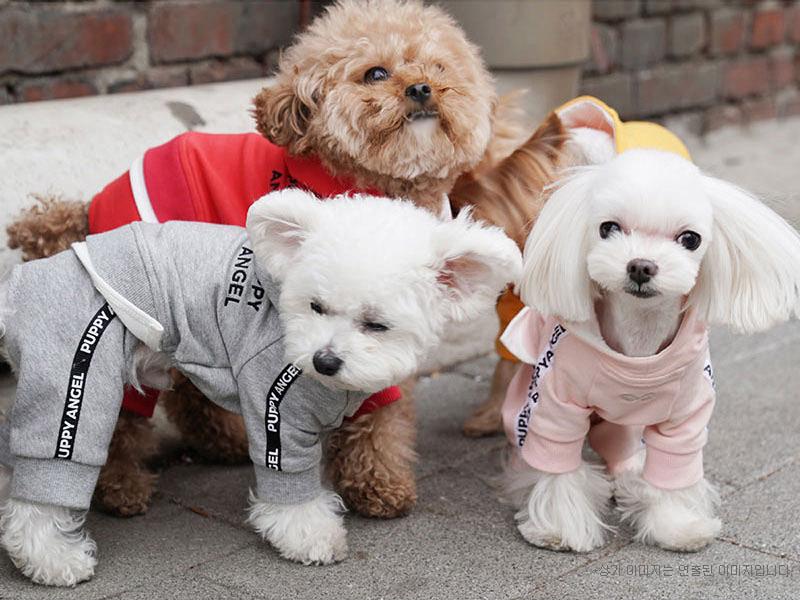 красивые собачки в одежде