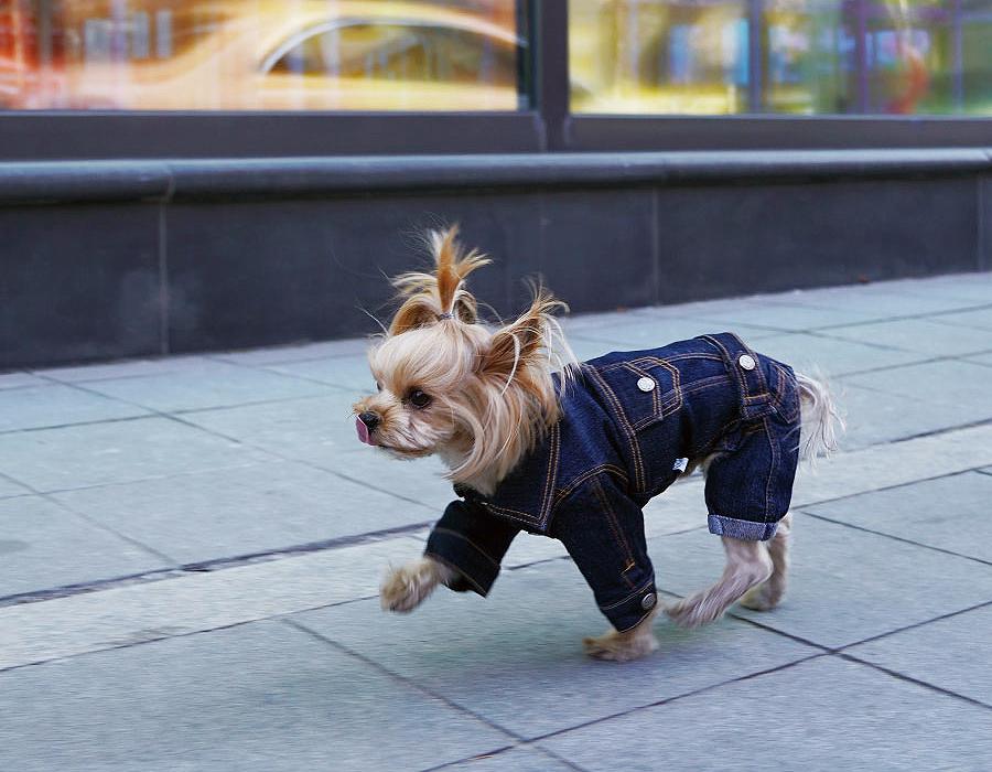 Джинсовая куртка для собак