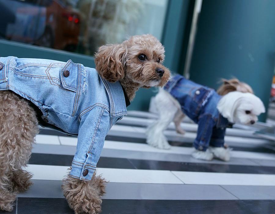 Куртка для собак Puppy Angel