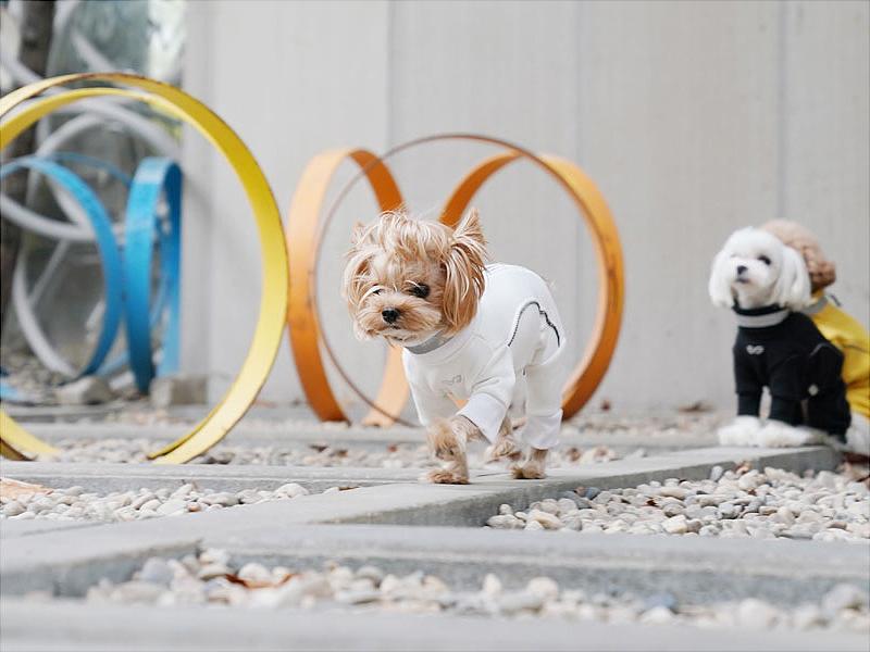 Теплый костюм для собак
