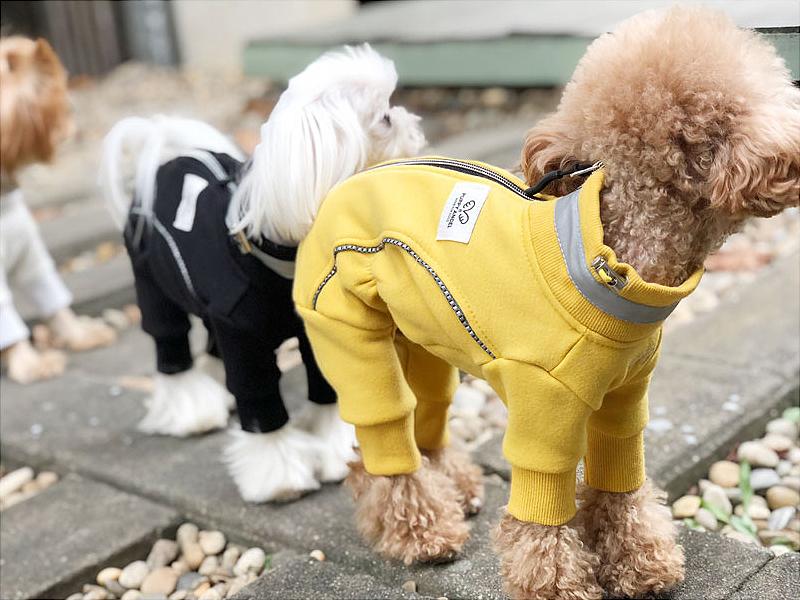 Аджилити с собакой