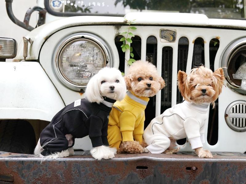 Костюм из флиса для собаки