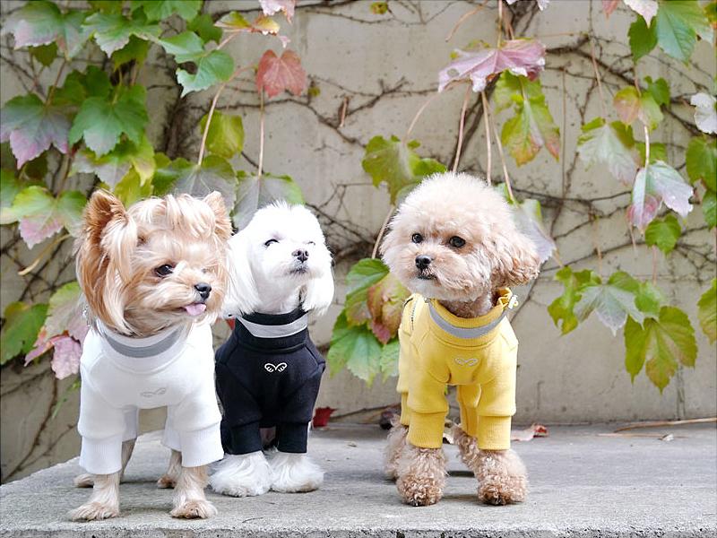 Флисовый костюм для собак