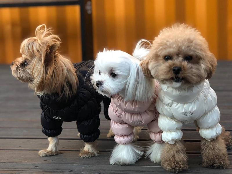 комбинезон для собак с застежкой на спинке