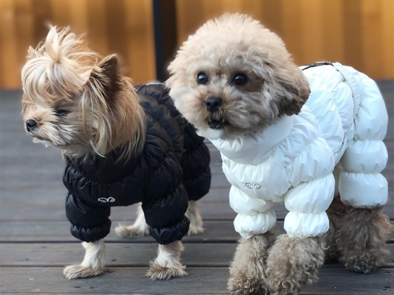 теплый комбинезон для собак