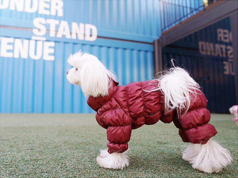 зимний комбез для собаки с закрытым животиком