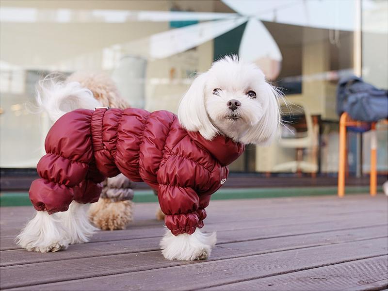 утепленный комбинезон для собаки