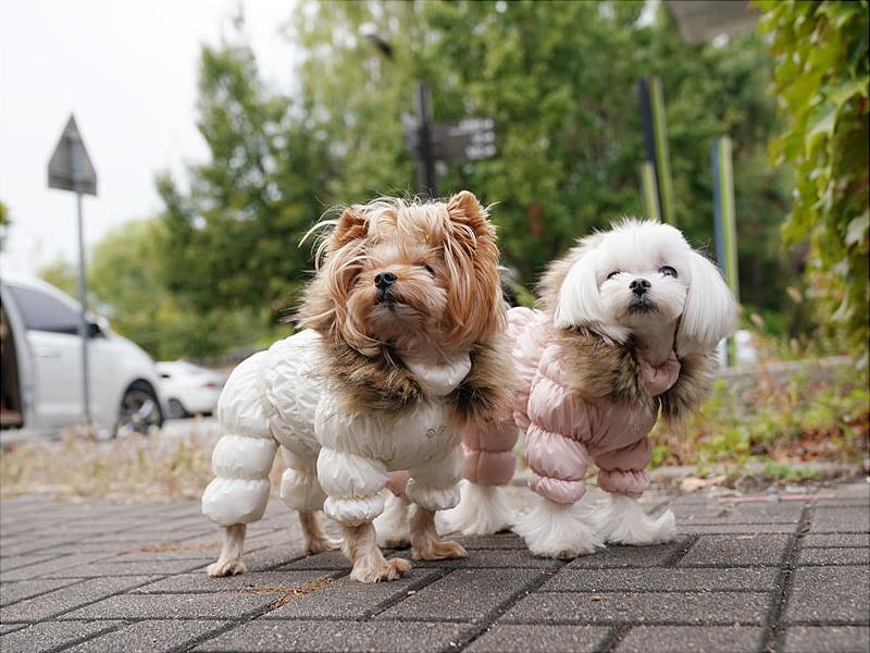 теплый комбинезон для собак с капюшоном