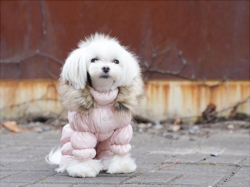 зимний комбинезон для собак с капюшоном