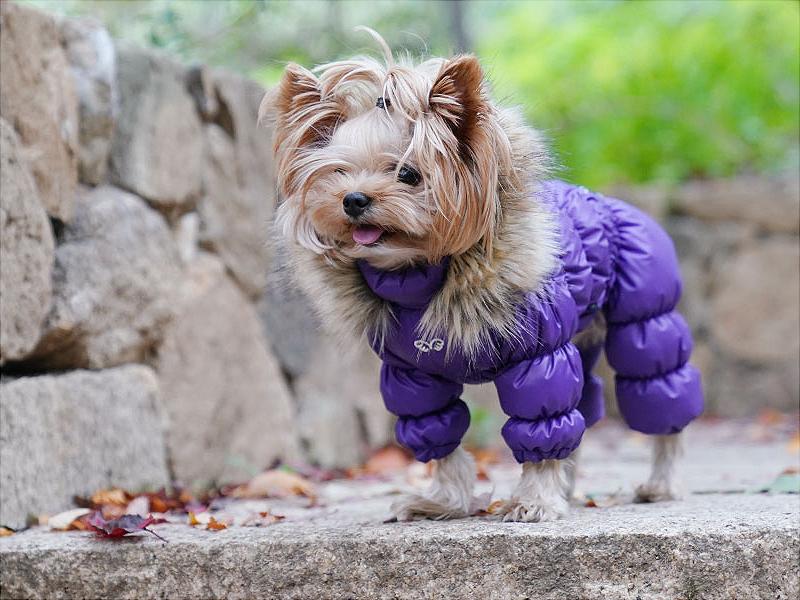 комбинезон дутик для собак