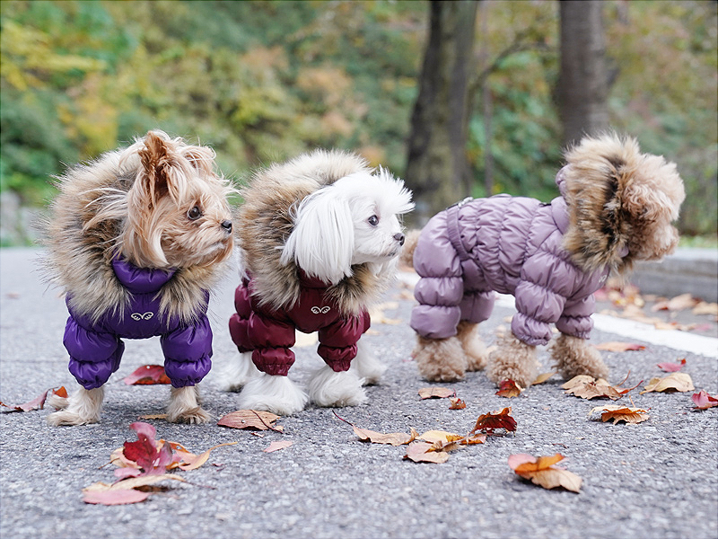 Комбез с молнией на спинке для собаки