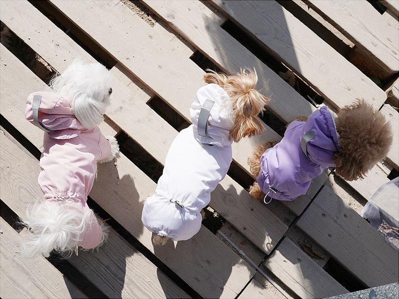 комбинезон для собак Puppy Angel