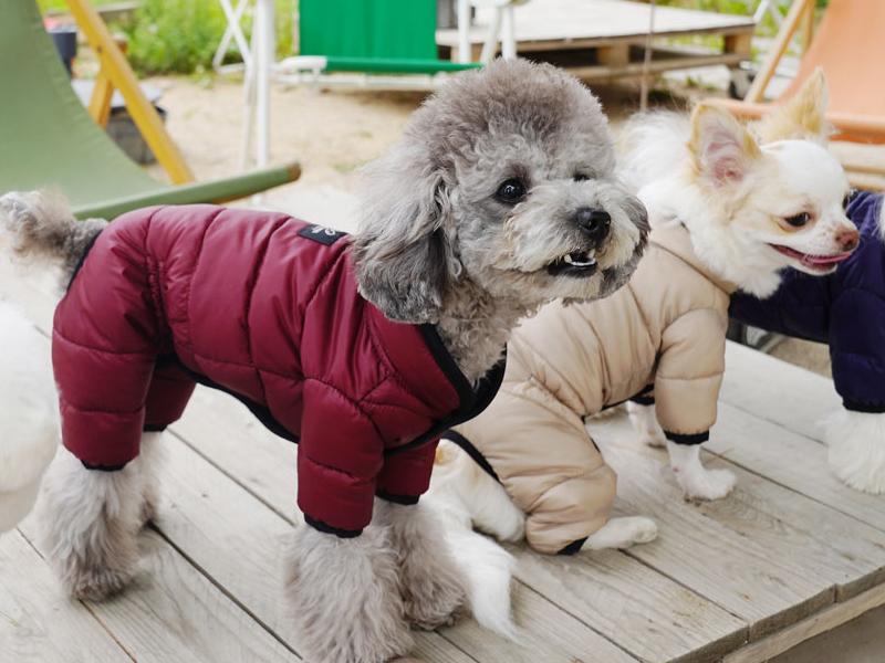 комби для собачки девочки