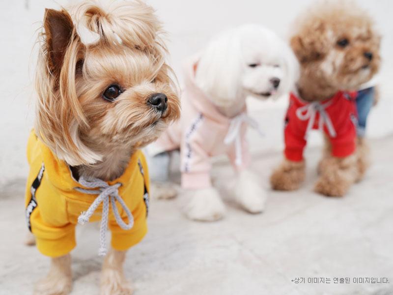 собачки в одежде