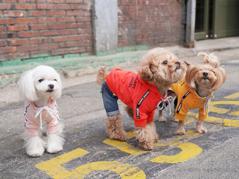 толстовка для собак