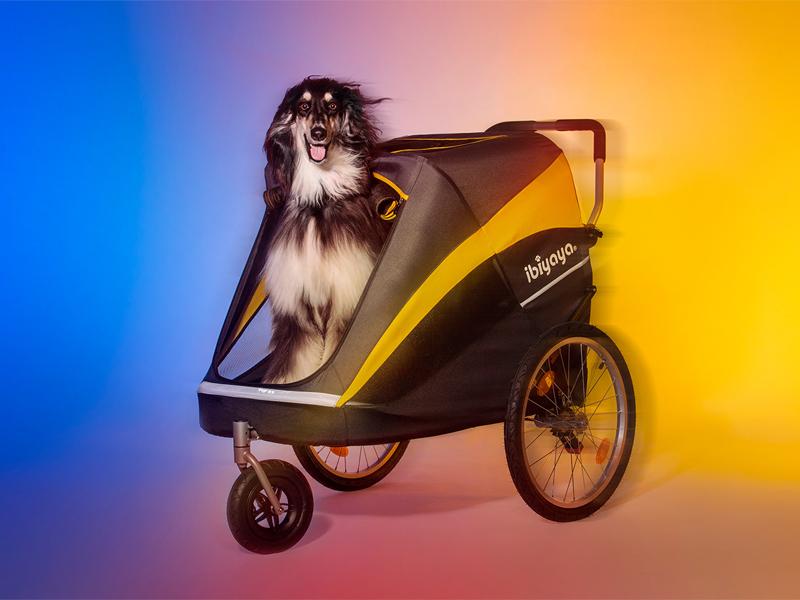 собака в коляске в догбутик