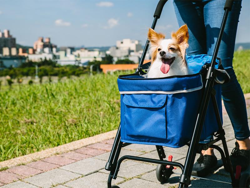 коляска в дог бутике для собак