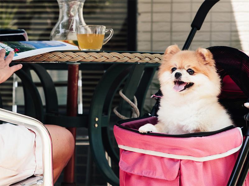 прогулка с собакой в коляске