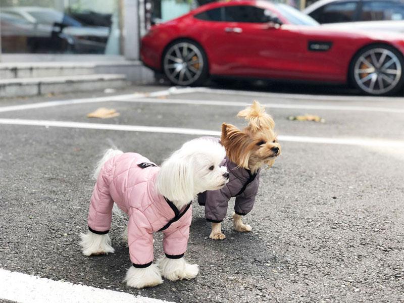 Комбинезон для собаки Стежка для девочек