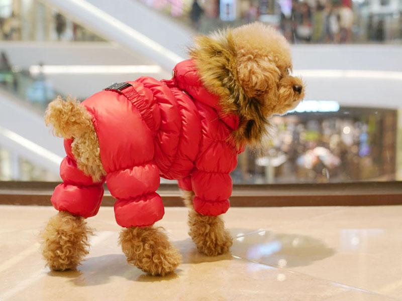Комбинезон для собаки Puppy Angel на кнопках с капюшоном
