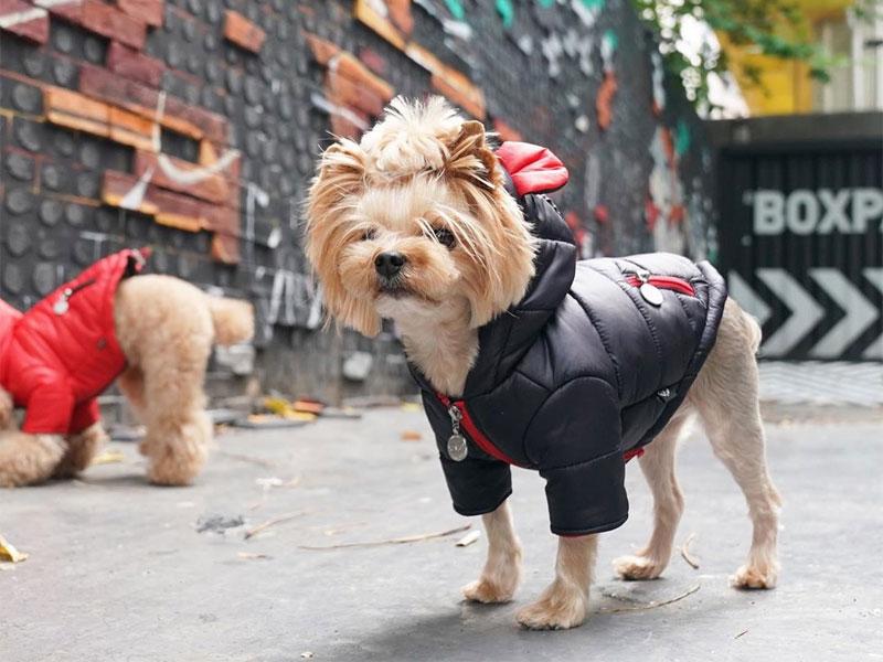 куртка для собак с ушками на капюшоне