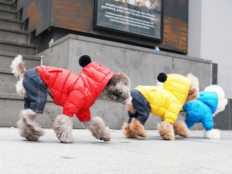 комби куртка и штанишки для собак
