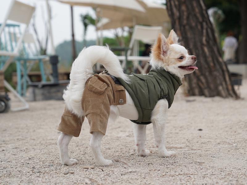армейский жилет для собак