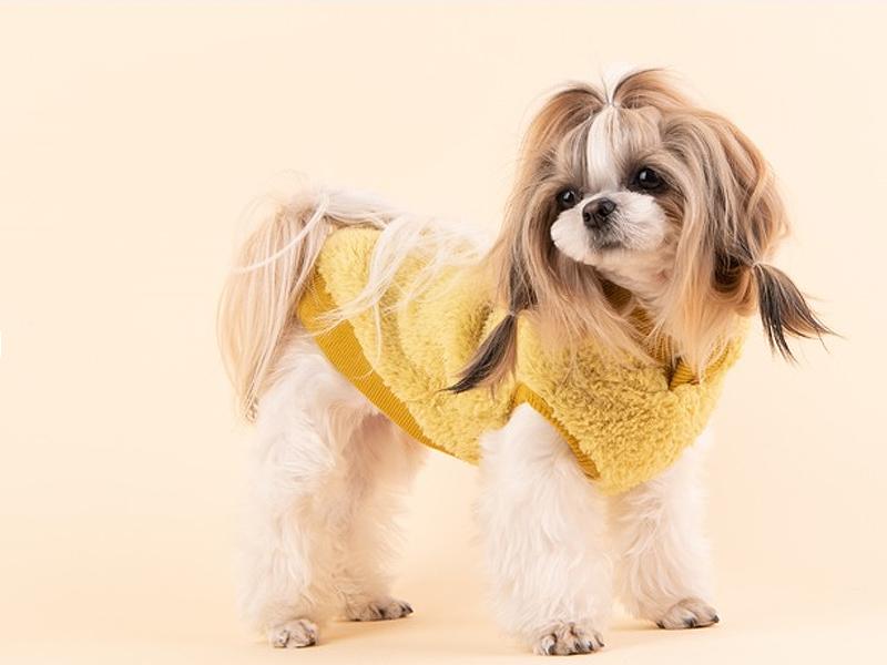 плюшевая одежда для собак