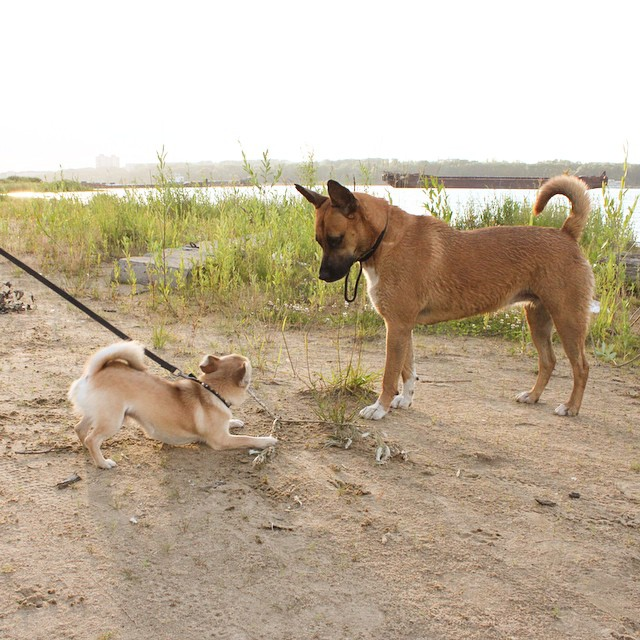 Дэни и Изабель - амбассадоры магазина одежды для собак glamdog.ru